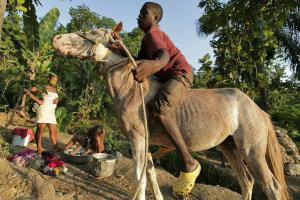 pereira-donkey